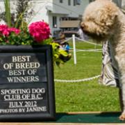 Jappaloup wins Best of Breed