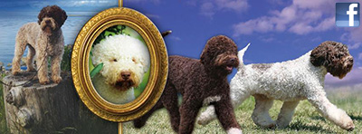 Lagotto Kennels Facebook Page