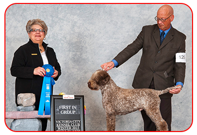 Lagotto Kennels Show Dogs